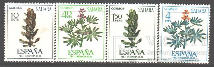 Испанская Сахара. 1967. Флора **.