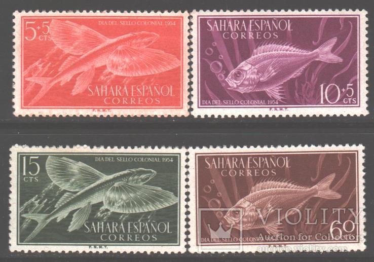 Испанская Сахара. 1954. Рыбы **.