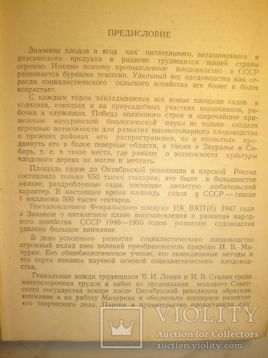 Садоводство. 1951г., фото №5