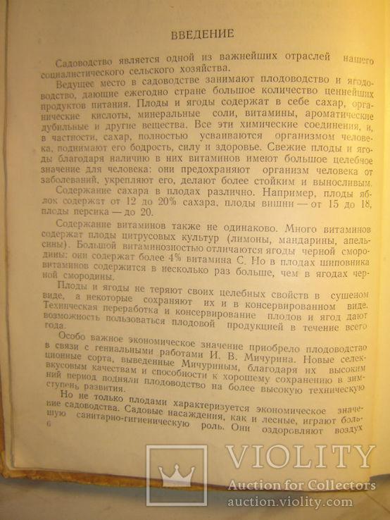 Садоводство. 1951г., фото №6