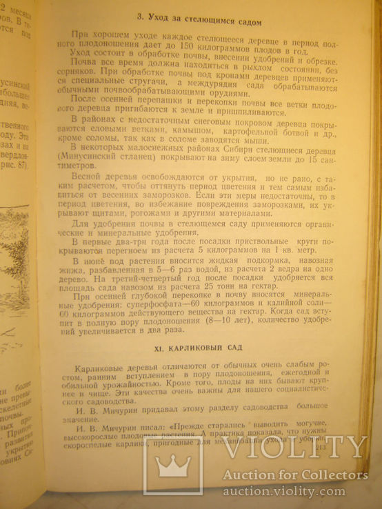 Садоводство. 1951г., фото №9