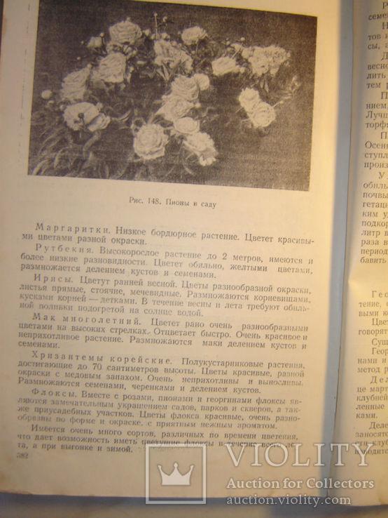 Садоводство. 1951г., фото №10