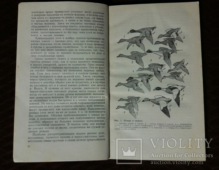 Водоплавающая дичь 1987г. Москва Агропромиздат Я.С.Русанов, фото №6