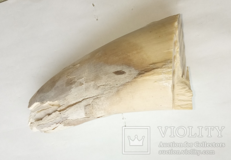 Фрагменты бивня мамонта 463 г, фото №5