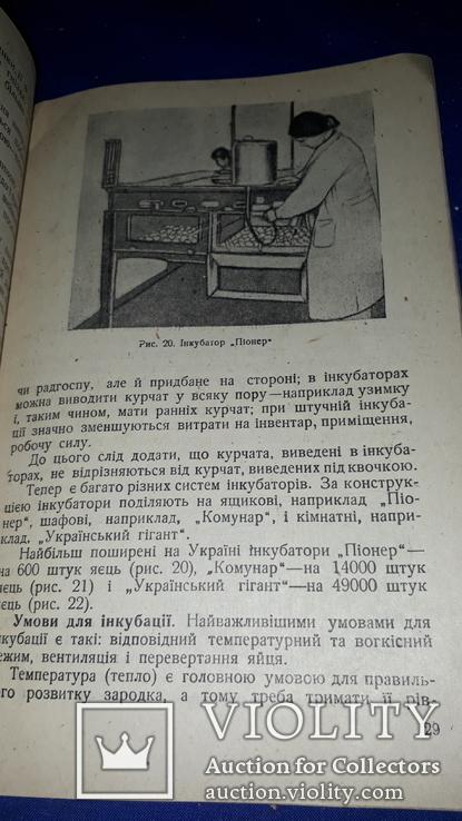 1936 Птахівництво, фото №11