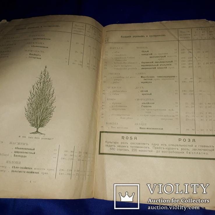 1909 Каталог деревьев Минск 25х17 см., фото №3