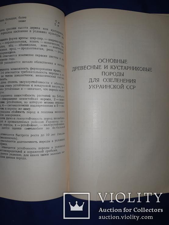 1952 Озеленение населенных мест Киев, фото №3