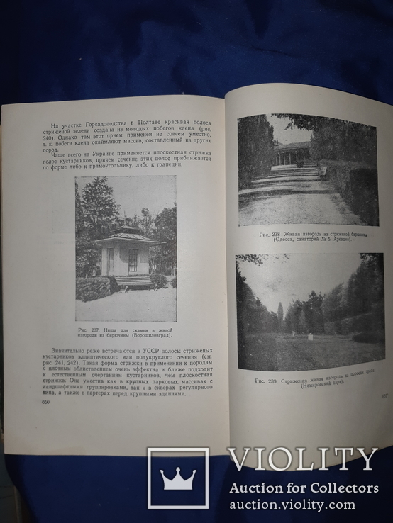 1952 Озеленение населенных мест Киев, фото №5