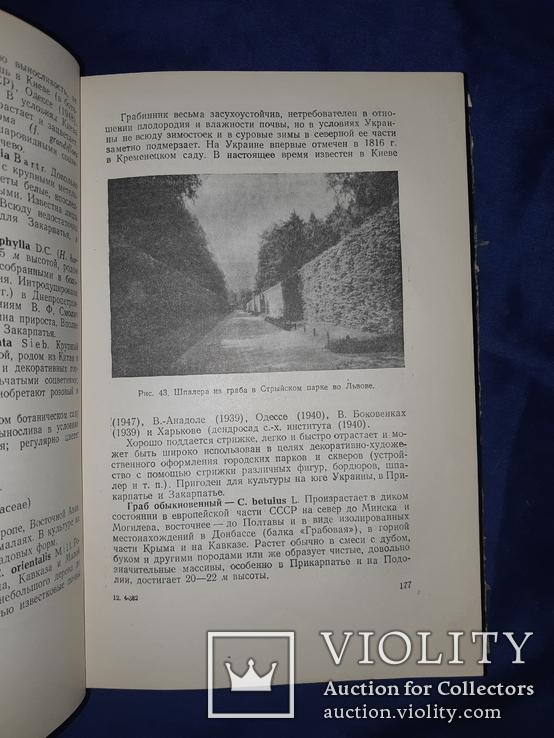 1952 Озеленение населенных мест Киев, фото №11