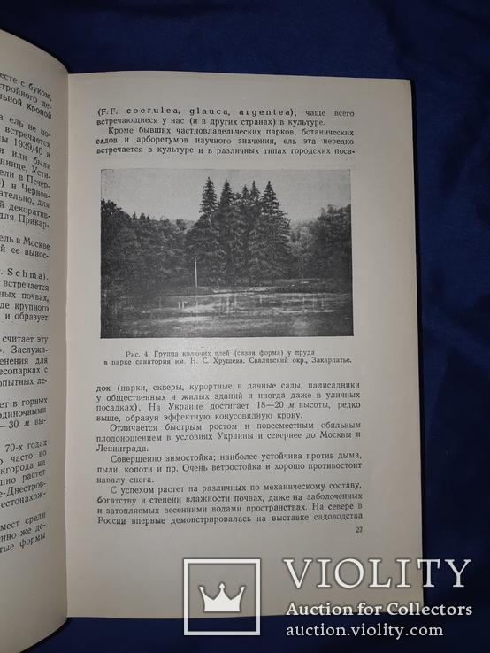 1952 Озеленение населенных мест Киев, фото №12