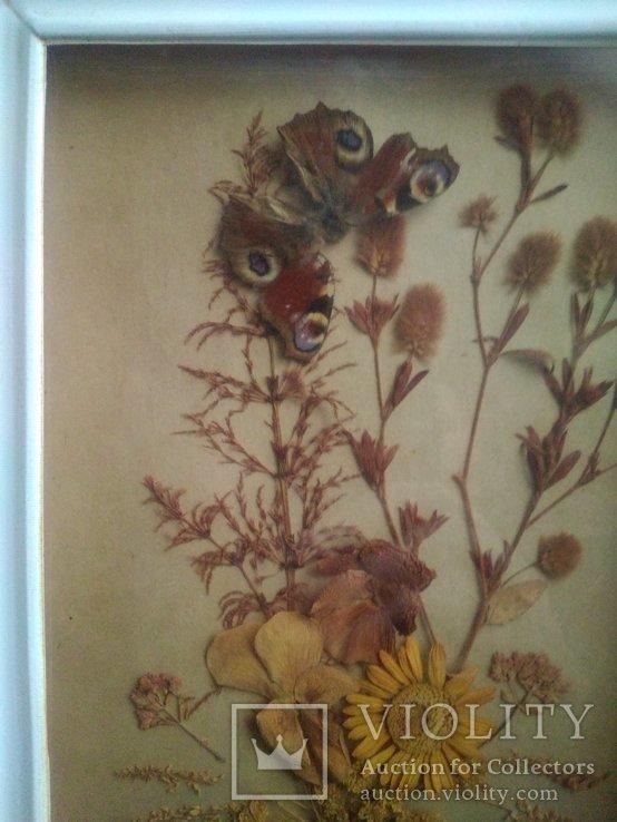 Бабочка и гербарий из далёких времен ссср, фото №2