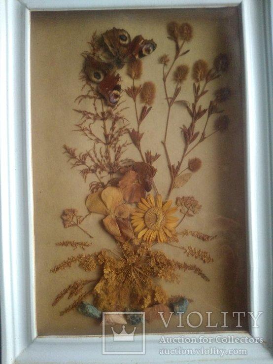 Бабочка и гербарий из далёких времен ссср, фото №4
