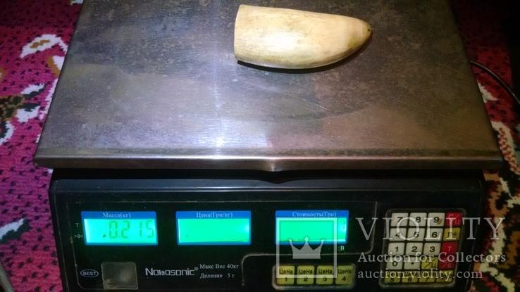 Зуб кашалота 216 гр., фото №3