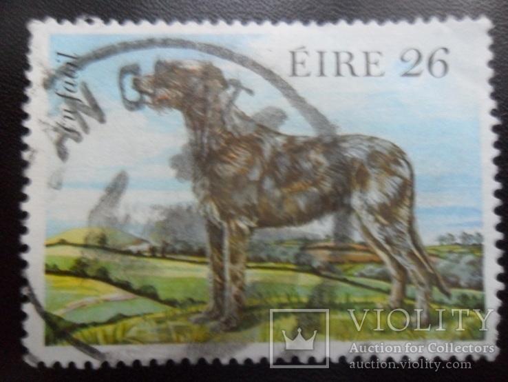 Фауна. Ирландия. Собака.  гаш