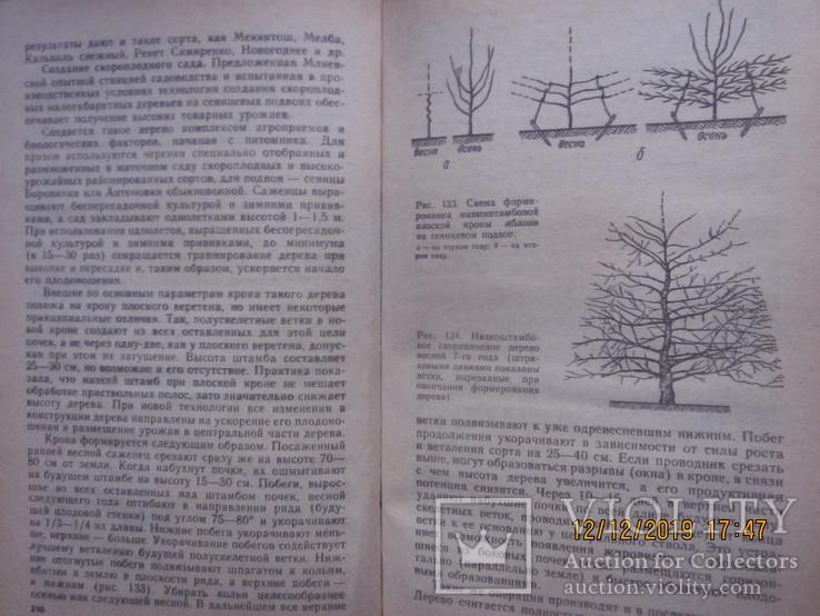 Советы садоводу-застройщику. 1984 г., фото №8