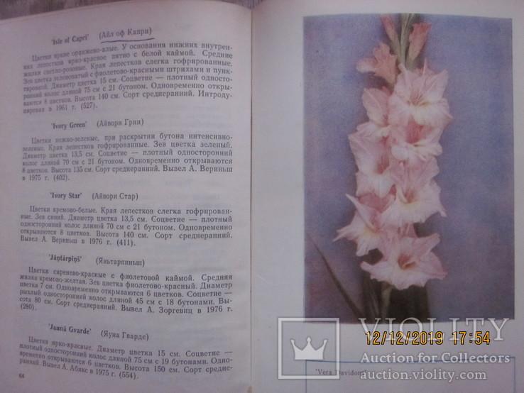 Гладиолусы и тюльпаны., фото №4