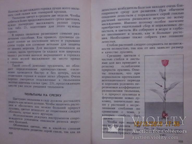 Гладиолусы и тюльпаны., фото №11