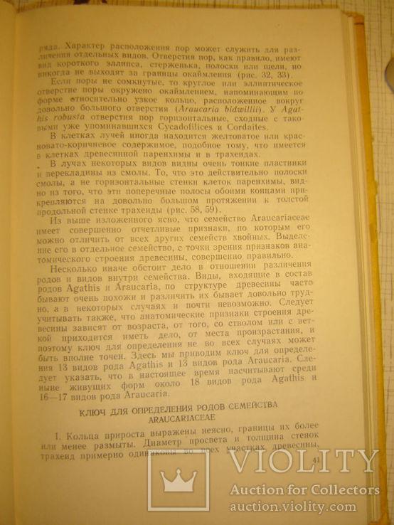 Определитель древесины голосеменных по микроскопическим признакам., фото №4