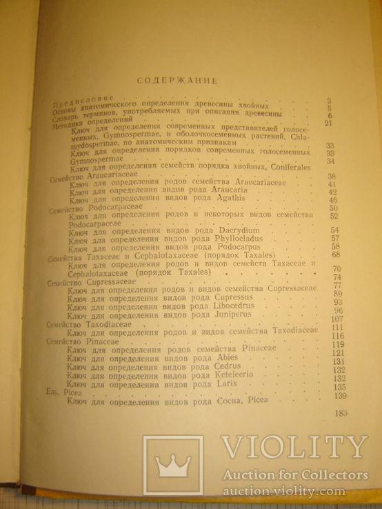 Определитель древесины голосеменных по микроскопическим признакам., фото №6