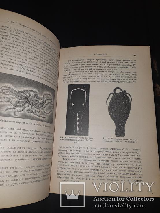 1896 Жизнь моря в 2 томах, фото №6