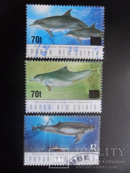 Фауна моря. Папуа Новая Гвинея. Дельфины. гаш