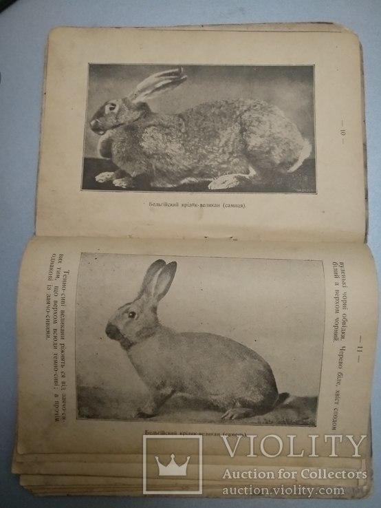 1909 год Черновцы Кролики разведение выращивание