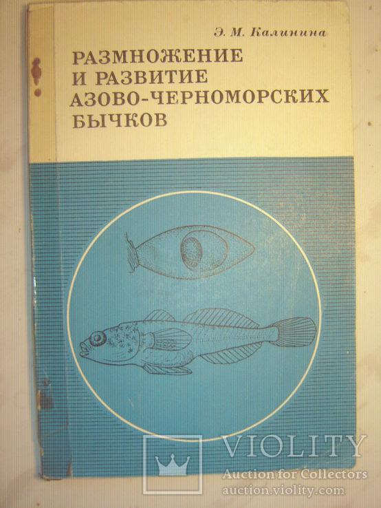 Размножение и развитие азово-черноморских бычков., фото №2