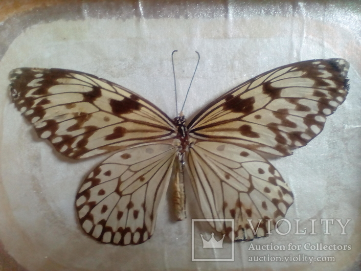 Бабочка в рамке, фото №4
