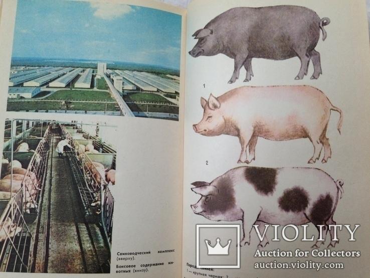 Беседы о животноводстве  Залыгин А.Г.  Просвещение 1986. 126с. ил., фото №11