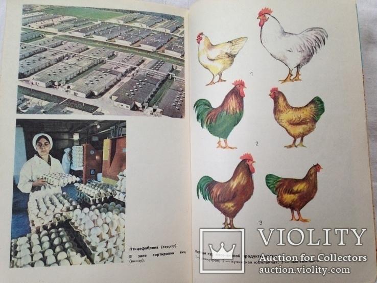 Беседы о животноводстве  Залыгин А.Г.  Просвещение 1986. 126с. ил., фото №13