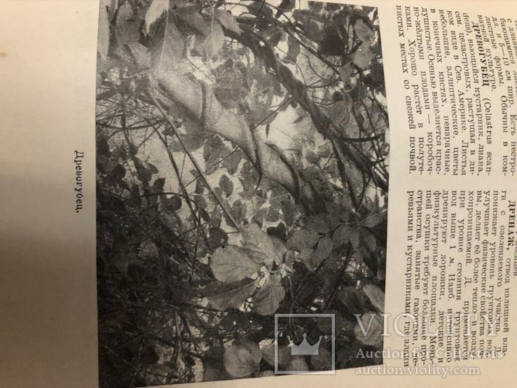 Декоративное садоводство краткий словарь-справочник 1949 г. №7к, фото №8