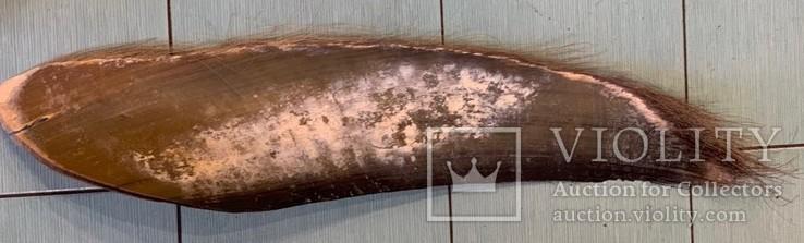 Китовый ус, фото №3