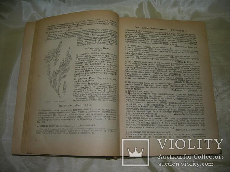 Флора средней России, книга 1933, фото №9