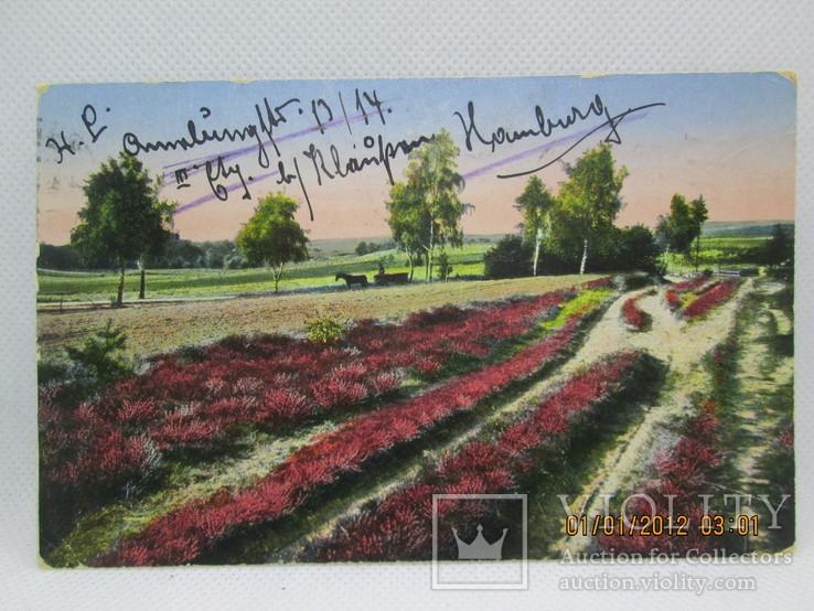 Старинная открытка  Люнебургская пустошь Германия, фото №2