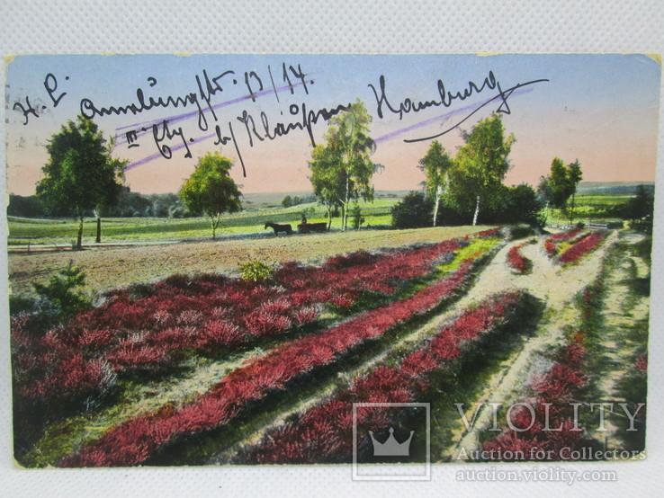 Старинная открытка  Люнебургская пустошь Германия, фото №3