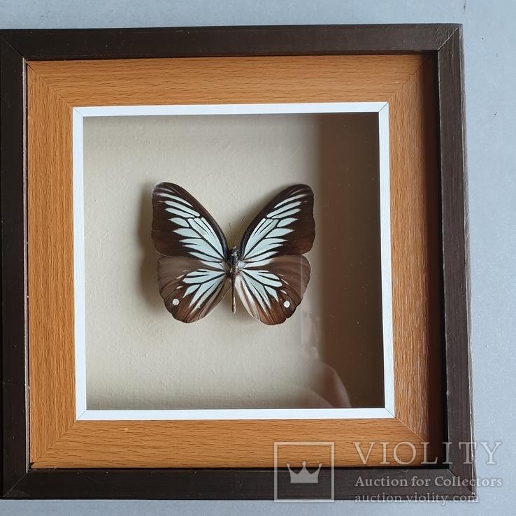 Бабочка 3, фото №2
