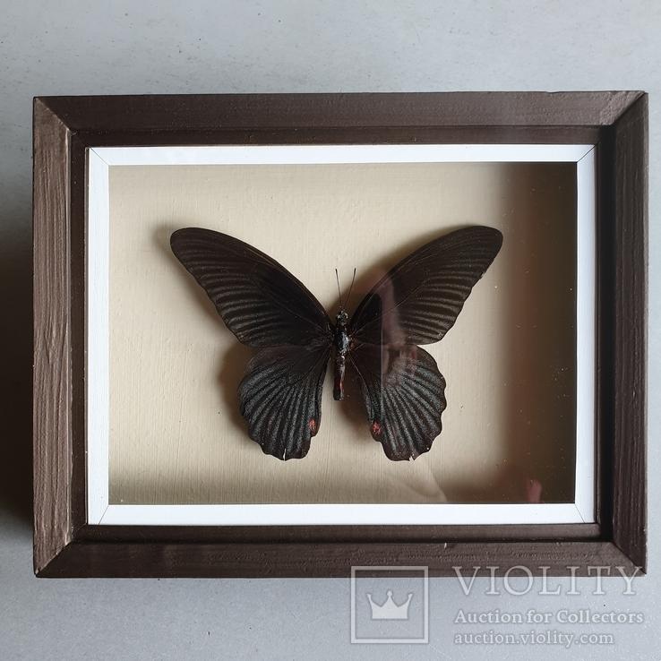 Бабочка 4, фото №2