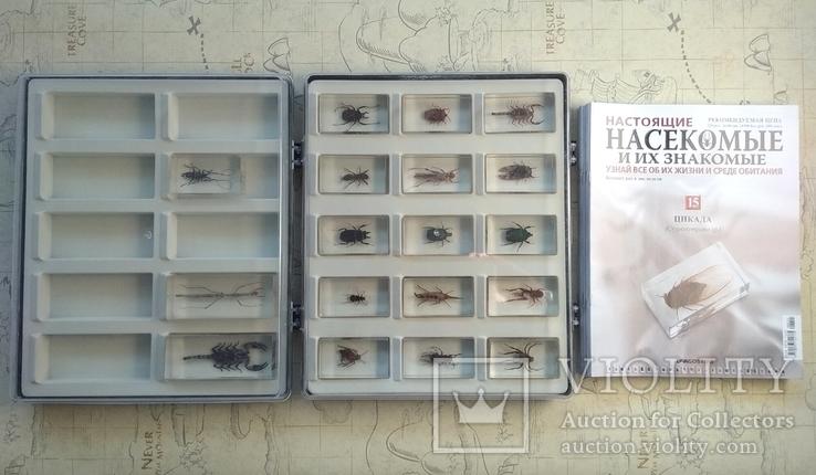 Жуки в стекле, настоящие Насекомые и их знакомые, коллекция 18 шт., фото №2
