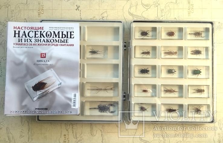 Жуки в стекле, настоящие Насекомые и их знакомые, коллекция 18 шт., фото №3