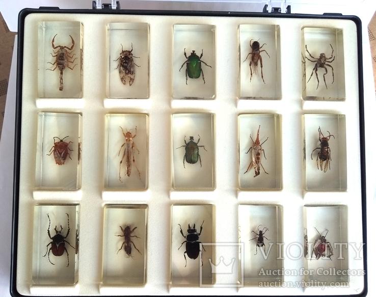 Жуки в стекле, настоящие Насекомые и их знакомые, коллекция 18 шт., фото №6