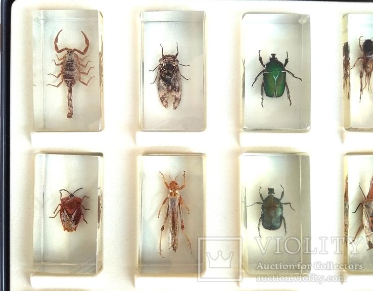 Жуки в стекле, настоящие Насекомые и их знакомые, коллекция 18 шт., фото №8