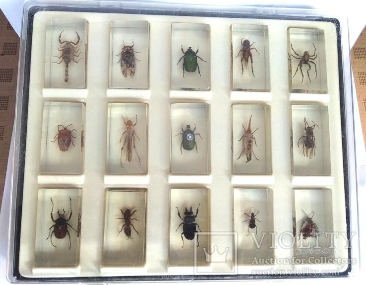 Жуки в стекле, настоящие Насекомые и их знакомые, коллекция 18 шт., фото №12