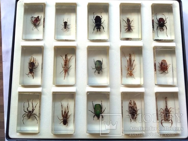Жуки в стекле, настоящие Насекомые и их знакомые, коллекция 18 шт., фото №13