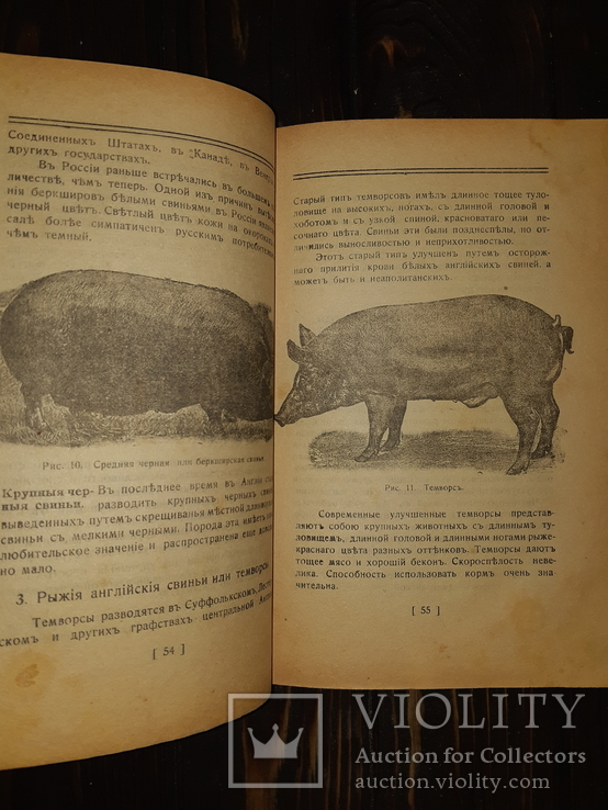 1919 Свиноводство
