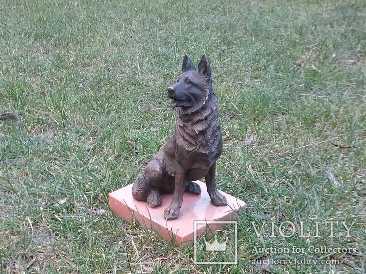Немецкая овчарка бронза, фото №9