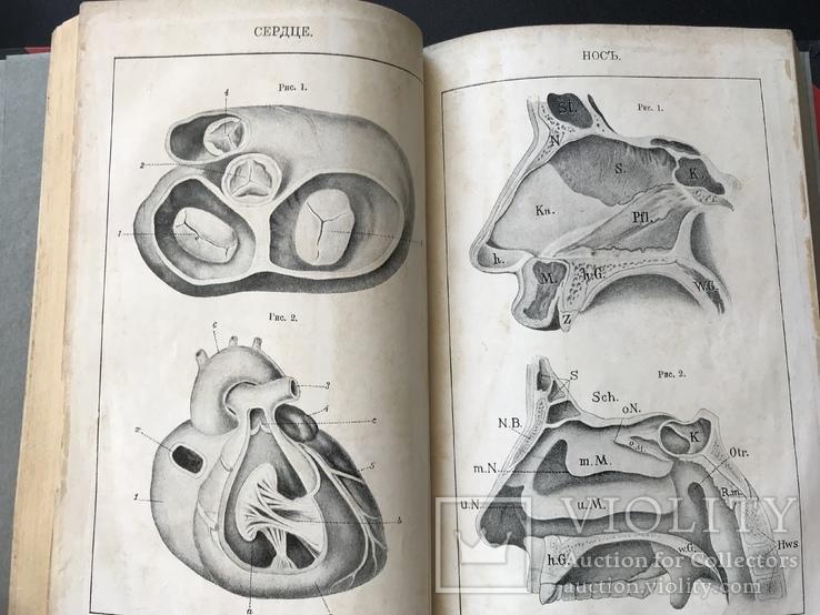 1907 Здоровье. Болезни органов движения,дыхательных органов. Венерические. Проституция, фото №6