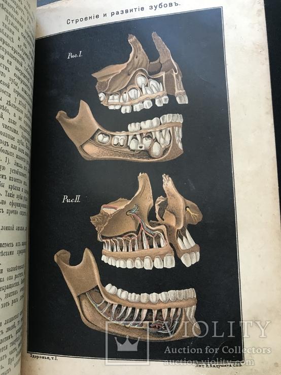 1907 Здоровье. Болезни органов движения,дыхательных органов. Венерические. Проституция, фото №9