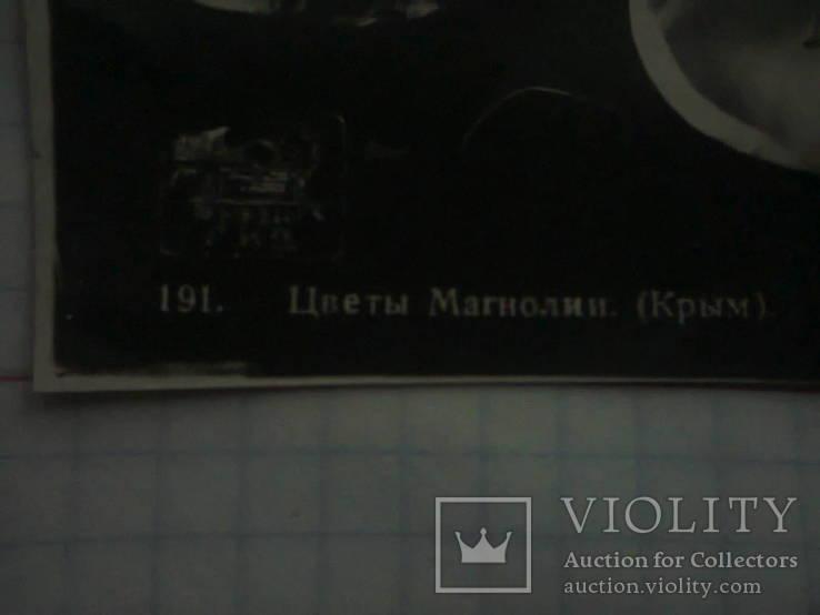 Фотооткрытка. Крым. Цветы Магнолии (Крым ). № 191., фото №4