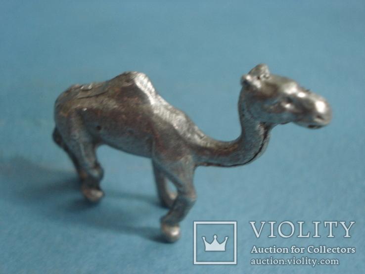 Верблюд., фото №2