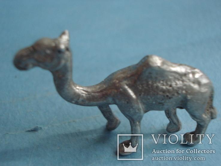 Верблюд., фото №3